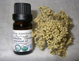 Achillea (Yarrow) Essential Oil